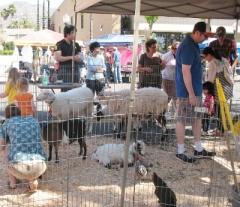 petting zoo at Montrose jharvest market