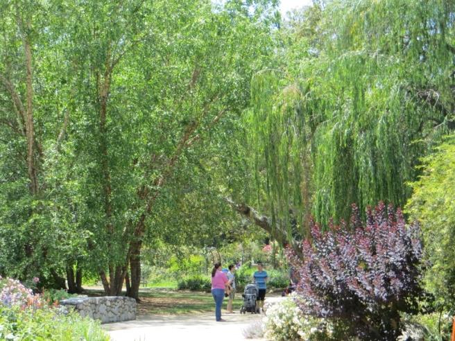 Trees in Rose Garden Descanso Gardens