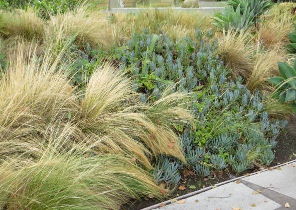 Los angeles gardens lacitypix for Zero maintenance plants