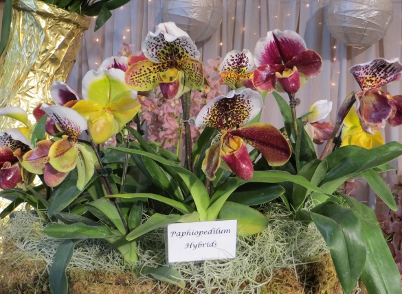 orchid display Santa Barbara orchid show