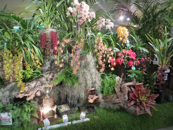 winning display amateur orchid grower