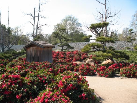 azaleas in bloom SuihoEn Gardens Van Nuys