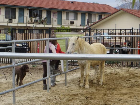Palamino horse near Glendale Narrow