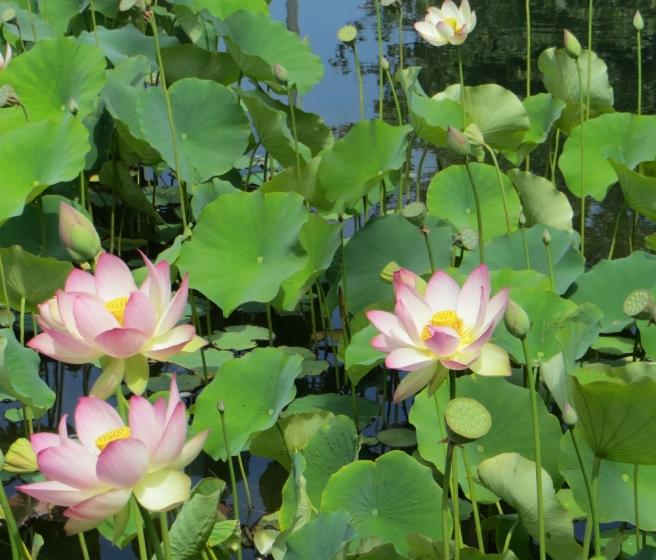 Los in bloom Echo Park