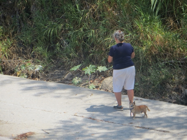 woman walking dog los angeles river