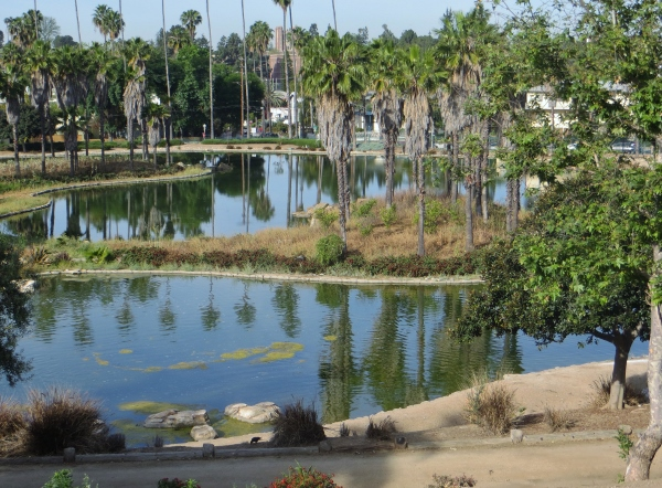 Rowena reservoir bird sanctuary