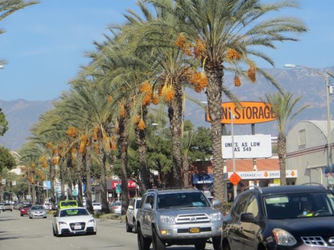 Date palms arroyo parkway pasadena