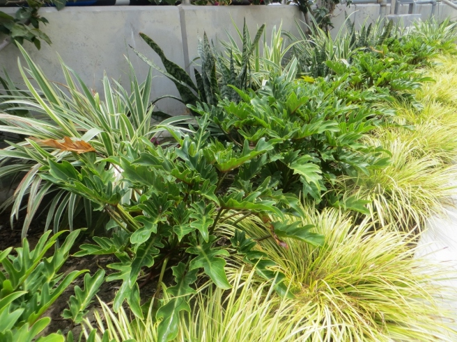 drought tolerant plants Naples Island Long Beach (