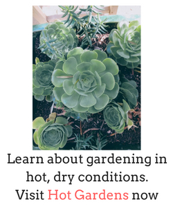 Hot Gardens. Learn about gardening in hot, dry conditions