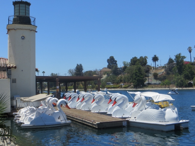 Swan paddle boats echo park lake los angeles