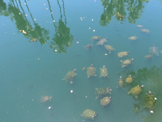 turtles in echo park lake
