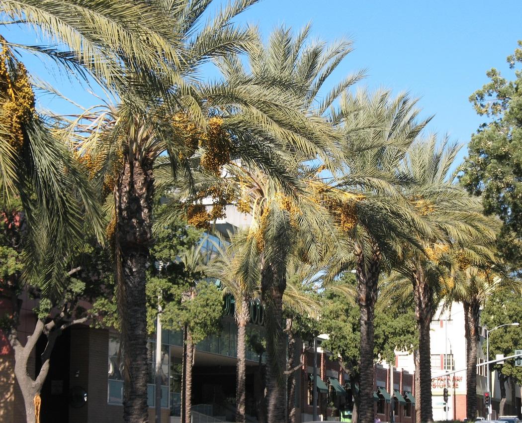 Meet Singles in Pasadena CA for Local Online Dating